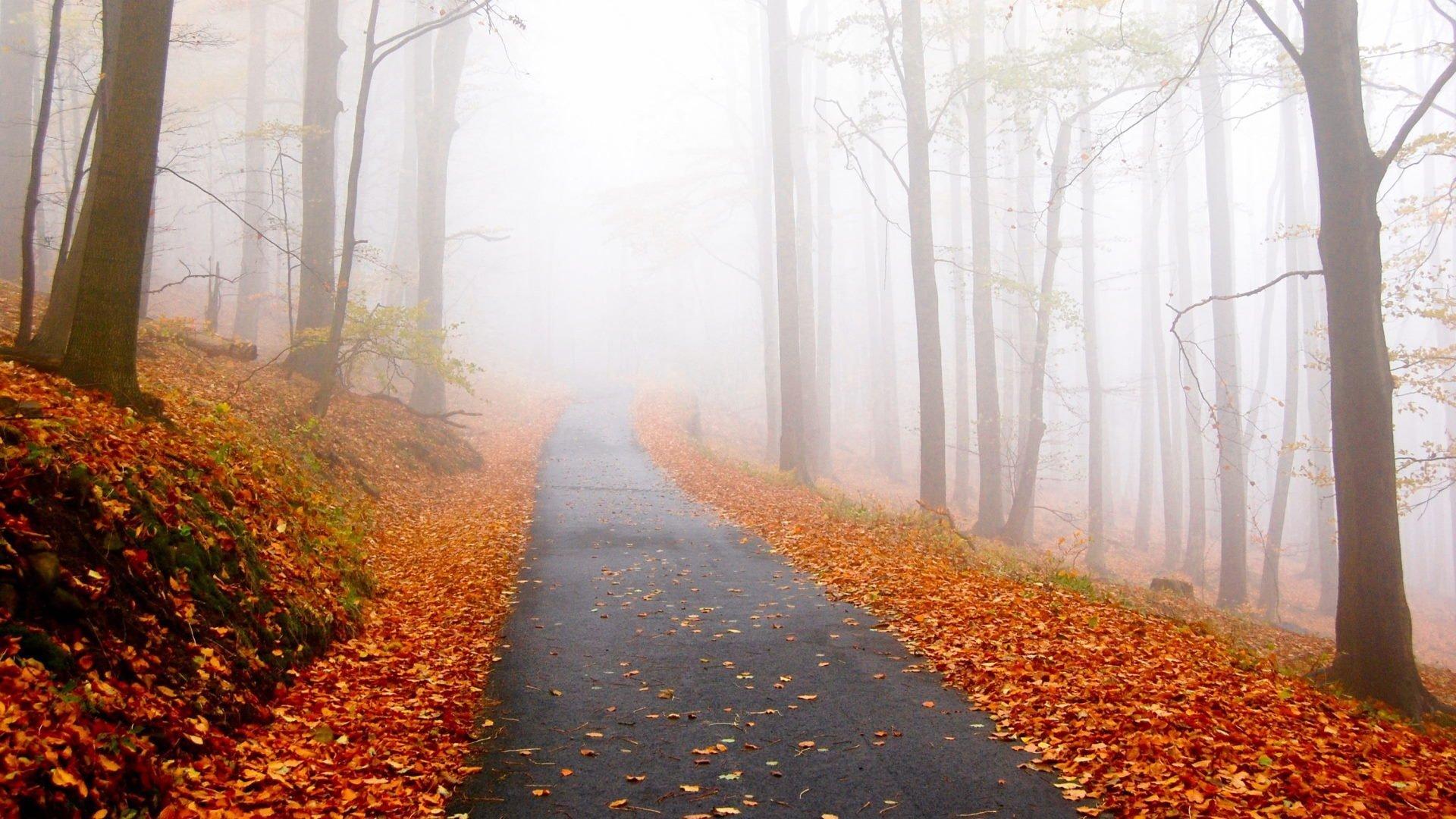 Efterår, løvfald, tåge